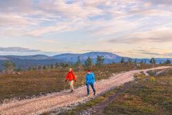 Kaksi retkeilijää sorapolulla ilta-auringon valaisemassa tunturimaisemassa Pallas-Yllästunturin kansallispuistossa.